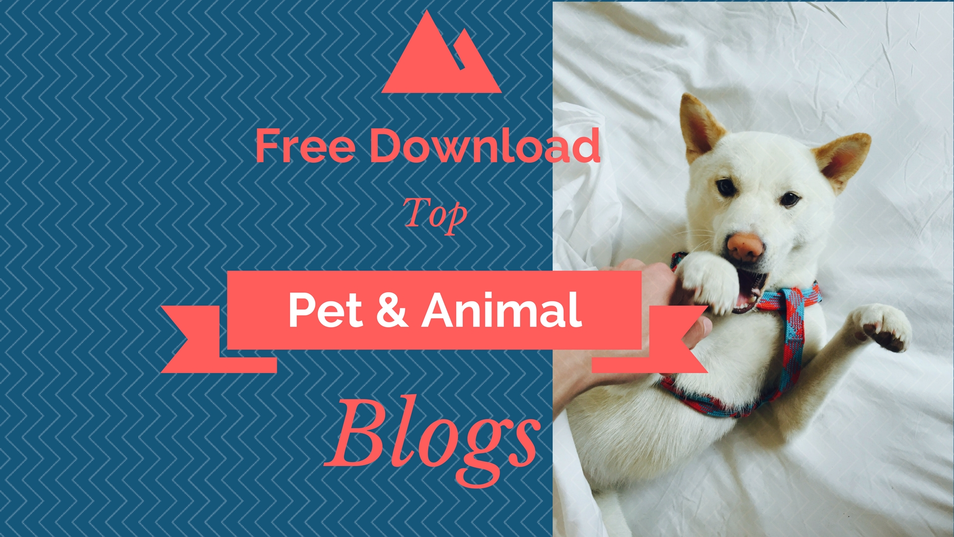 (Free Download!) List of Top Pet Influencers